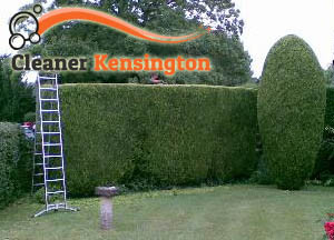 Hedge Maintenance Kensington