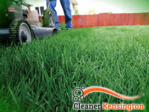 grass-cutting-services-kensington